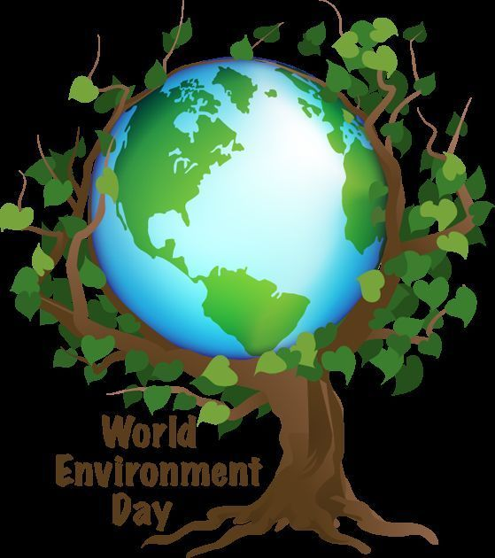Essay On The Environment